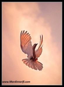 Mardin Güvercinleri