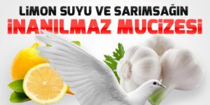 Güvercin Hastalıkları Antibiyotik Yapımı